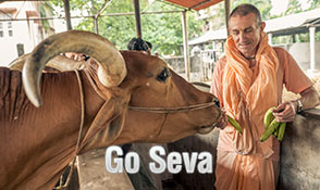 Offer Go Seva!