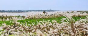 Ganga Swells filling low lands 2